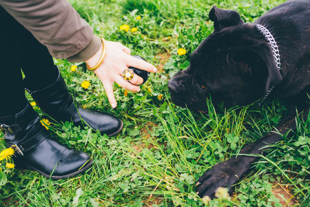 Close up on the hand of young woman holding a ball, playing fetch with her dog - friendship concept Stockfoto