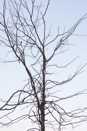 Silhouette of tree branch in the sky
