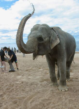 onlooker: The Bathing elephant on seaside of the gulf of finland. ( The Hotel of the Dune).