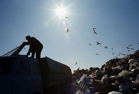 scavenging: City dump.Gulls.