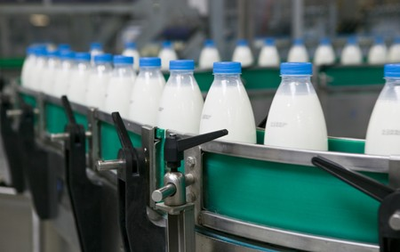 Dairy Plant. Conveyor with milk  bottles.