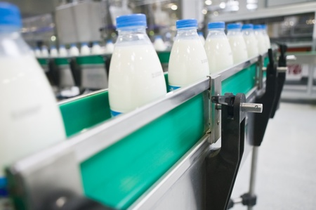 food production: Dairy Plant. Conveyor with milk  bottles.