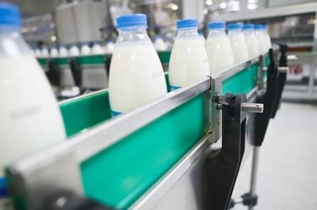linea de produccion: Planta de l�cteo. Cinta transportadora con botellas de leche. Foto de archivo