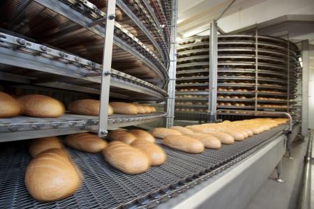 food staple: Bread bakery food factory. White bread. loafs.