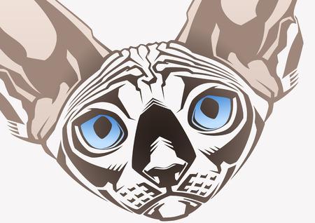 bare skinned: Sphinx cat  Close-up portrait