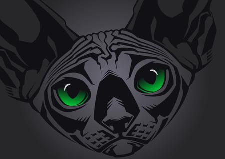 bare skinned: Close-up portrait of hairless Sphinx cat on black background  Vector illustration Illustration
