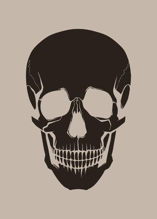sapiens: Human skull