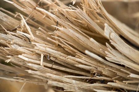 splinters: Wood splinters background. Close up. Stock Photo