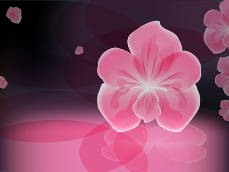pink orchid: pink orchid on a dark glossy background