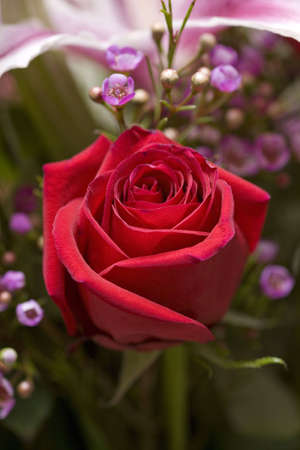 Red rose in a bouquet of flowers Stock Photo