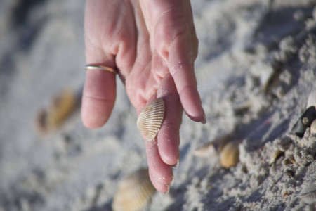Female hand holding a shell at the beach. Showing off the find along the shore.