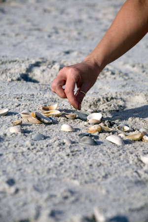 Female hand reaching down and picking shells at the beach. Selecting the right one from many. Stock Photo