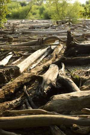 A forest worth of fallen trees, wasted, left to rot at the rivers edge Imagens
