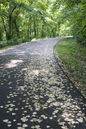 onset: Leaf covered road harkening the onset of autumn