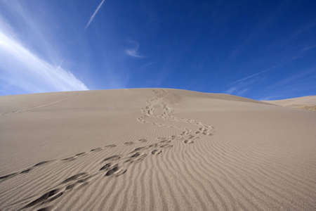 blown: Pair of footprints winding down the side of a sand dune.