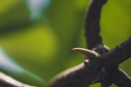Flower thorn Reklamní fotografie