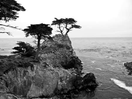 trees photography: Cliffside
