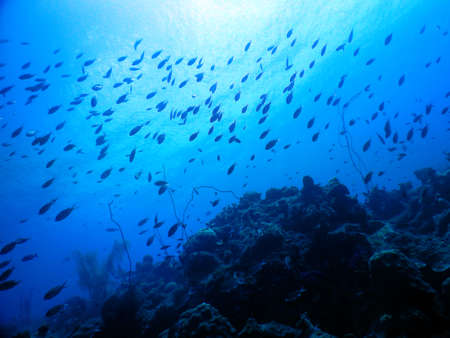 curacao diving