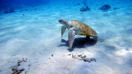 curacao diving Stockfoto