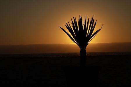 siloette: Sundown in Namibia