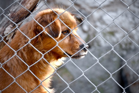 dog kennel: Sad dog in cage Stock Photo