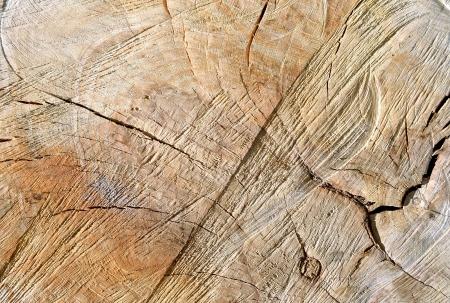 Rough wood texture photo