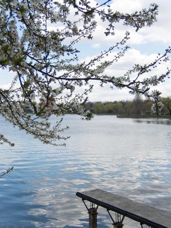 pontoon: blossom tree, lake, pontoon in a park Stock Photo