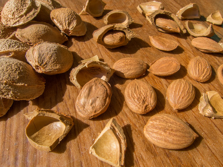 apricot kernel: apricot seed and cracked seeds Stock Photo
