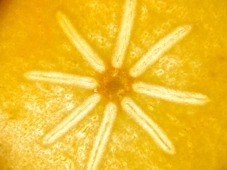 ebenaceae: texture detalis on back lit kaki persimmon fruit