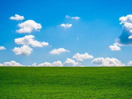 blue summer sky and fresh green grass summer scene Stock Photo