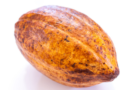 cocoa fruit on white