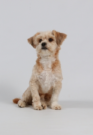 humor: mixed dog is sitting in the studio Stock Photo