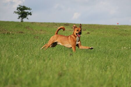 brown mixed dog have fun in the park Stock Photo