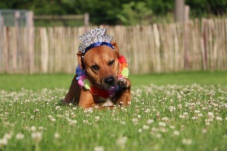 funny birthday dog ??in the garden