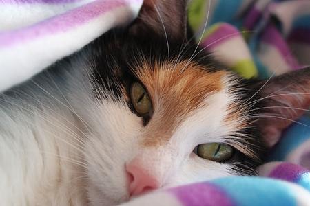 beautiful cuddling cat