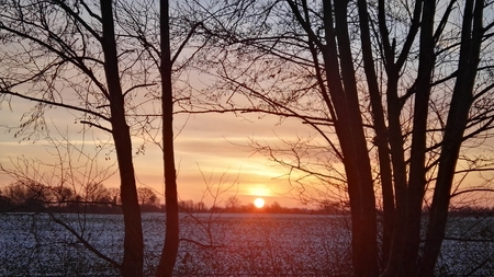 Sunrise in the winter between trees Stock Photo