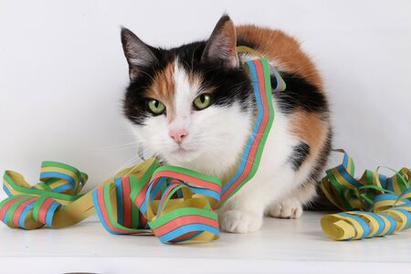 Colorful cat with colorful paper streamers in the studio