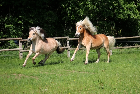 Two beautiful horses are running on a paddock in the sunshine Banco de Imagens - 101892374