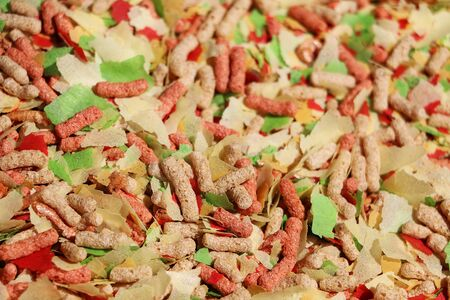 Extreme close up of different colorful fish feed 免版税图像