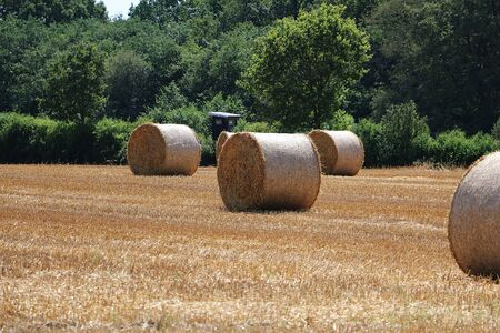 Many straw bales on a stubble field