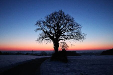 Beautiful and romantic silhouette of a tree early in the morning in the winter