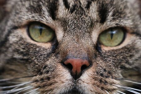 Extreme close up of a beautiful cat with green eyes
