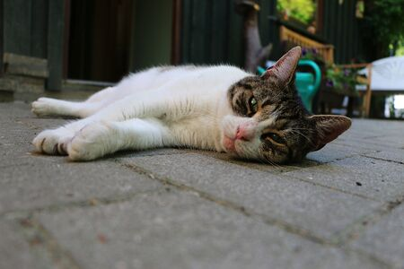 Beautiful cat is lying on the terrace and reelaxed