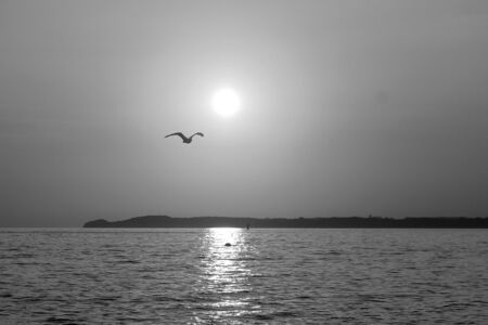 Black and white of a beautiful romantic sunrise in the north of Germany with the sun and a flying seagull Zdjęcie Seryjne