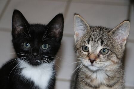 Two small cute kittens are looking up to the camera Zdjęcie Seryjne