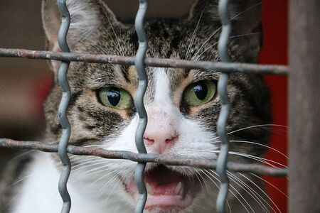 Beautiful crying cat behind a fence in the shelter