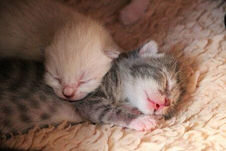Two cute little sleeping newborn kittens