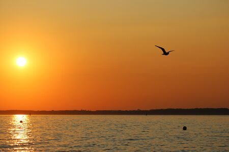 Beautiful romantic sunrise in north germany with the sun and a flying seagull
