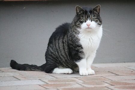 Beautiful small cat is sitting on the terrace in the garden Stok Fotoğraf