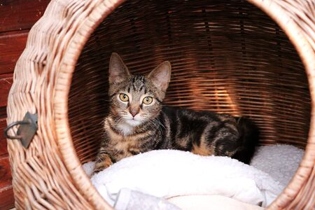 Little cat reads in a wicker basket